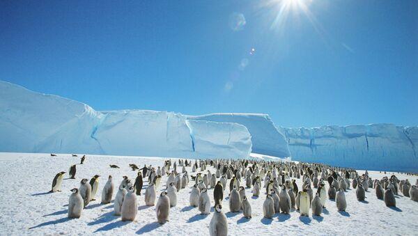 Emperor penguins near the Mirny Soviet Antarctic research station, 1989 - Sputnik International