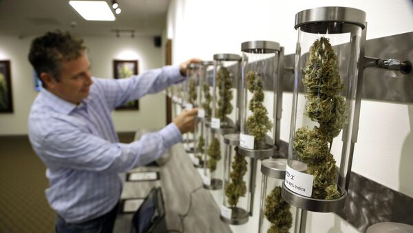 In this Nov. 5, 2014, file photo, Shane McKee, co-founder of Shango Premium Cannabis medical marijuana dispensary, pulls a sample from their display of cannabis flowers in Portland, Ore. Oregon voters have spoken on marijuana legalization and now legislators want their say. Though the legislative session is more than two weeks away, lawmakers have already introduced more than a dozen bills related to pot. - Sputnik International