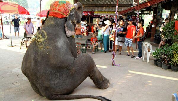 Elepant on tourist duty in Thailand - Sputnik International