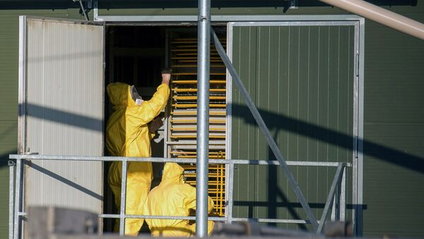 Experts wearing protection suits examine trays used to transport chicks at a poultry farm, where a highly contagious strain of bird flu - Sputnik International