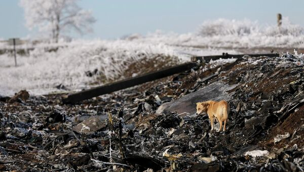 A dog stands at the site where MH17, a Malaysia Airlines Boeing 777 plane, crashed near the village of Hrabove (Grabovo) in Donetsk region - Sputnik International