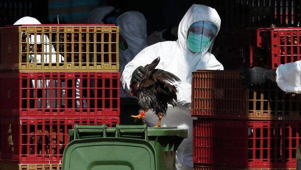 A workers (C) places a chicken in a bin during a cull in Hong Kong on December 31, 2014, after the deadly H7N9 virus was discovered in poultry imported from China - Sputnik International