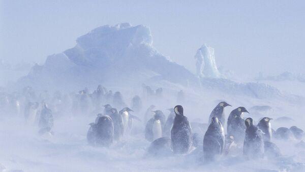 Glacier emperor penguin - Sputnik International