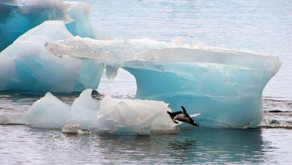 A penguin dives from an ice block - Sputnik International