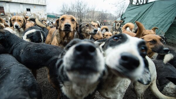 A picture taken on January 28, 2014 shows stray dogs, among the 450 which have found shelter and food in improvised shelter operated only by volunteer in Nis, 200 km south of Belgrade - Sputnik International