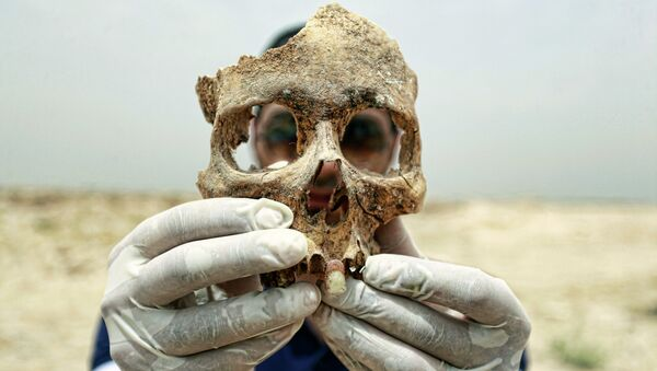 A forensic expert holds up part of a human skull found in a mass grave some 10 kilometers from the Iraqi central shrine city of Najaf. File photo - Sputnik International