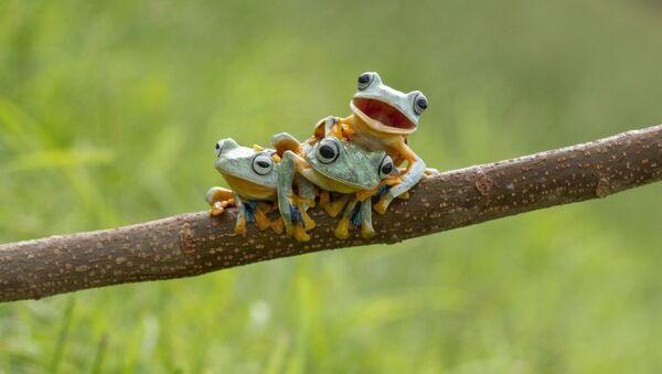 Frogs - Sputnik International
