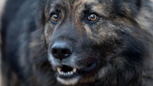 A dog (File) - Sputnik International