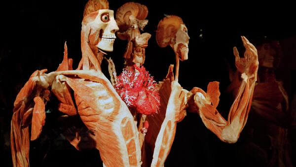 Gunther von Hagens' Body Worlds & The Story of the Heart on exhibit at the Buffalo Museum of Science in Buffalo, New York - Sputnik International