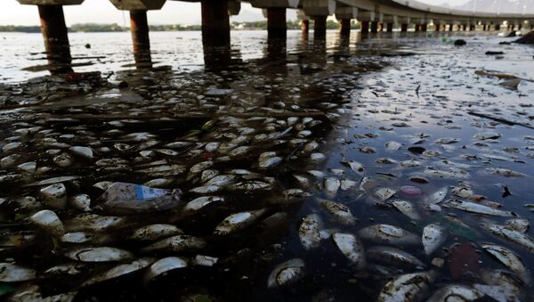 Dead fish and trash float in the polluted Guanabara Bay in Rio de Janeiro, Brazil. - Sputnik International