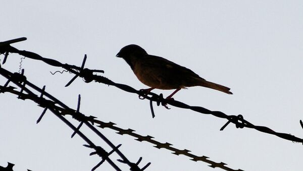Barbed wire bird - Sputnik International