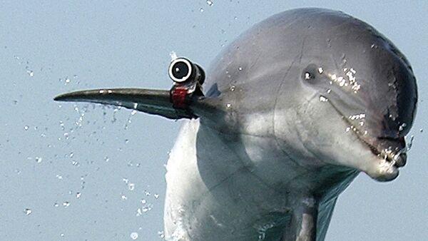 Fighting dolphin - Sputnik International