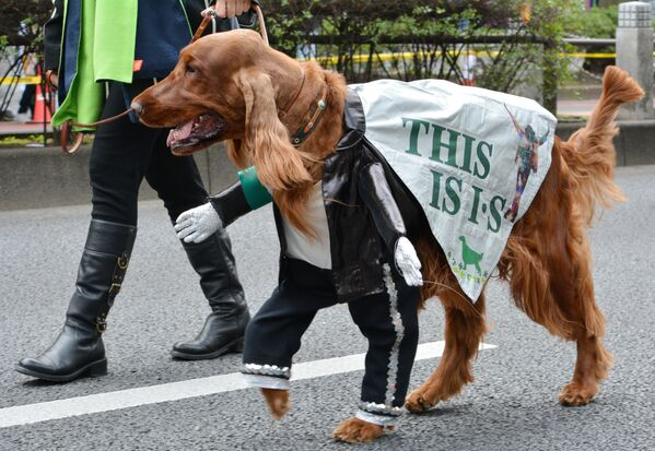 An Irish setter wearing a Michael Jackson costume takes part in a St. Patrick's Day parade in Tokyo during the parade to commemorate the Irish patron Saint Patrick. - Sputnik International