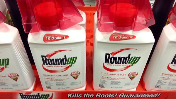 Monsanto's cash cow weedkiller Roundup probably causes cancer, according to a new report from the United Nation's cancer research organization. - Sputnik International