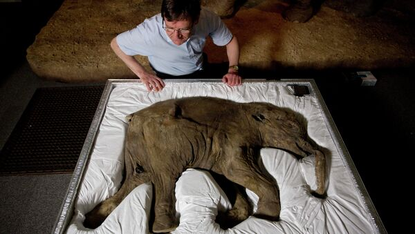 Mammoth researcher Professor Adrian Lister poses for photographs looking at Lyuba, a baby woolly mammoth considered to be the most complete example of the species ever found, at the Natural History Museum in London - Sputnik International