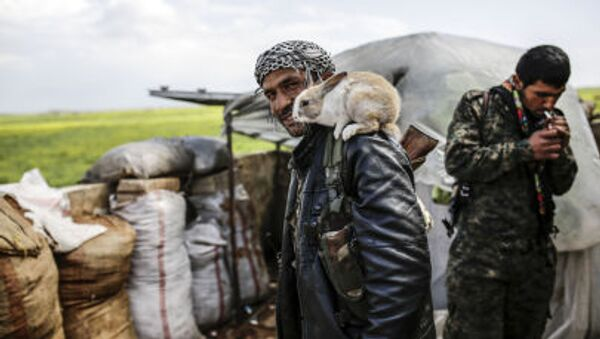 A Kurdish fighter poses with a rabbit on the outskirts of the Syrian town of Kobane, also known as Ain al-Arab - Sputnik International