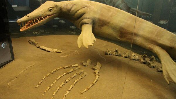 A model of a fleshed-out Mosasaur at the CFDC - Sputnik International