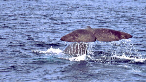 Whale in the Antarctic - Sputnik International