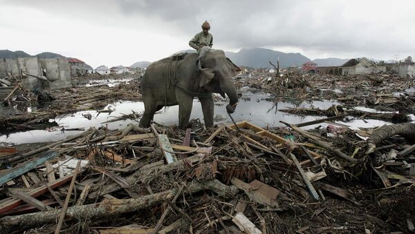 In this January 10, 2005 photo, an elephant which belongs to forest ministry removes debris in Banda Aceh, Indonesia. - Sputnik International