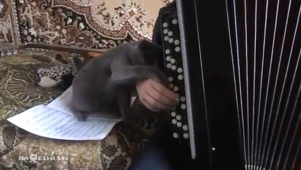 An anti-musical cat - Sputnik International