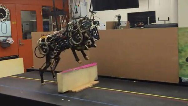 MIT Cheetah-Robot - Sputnik International