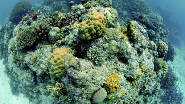 Great Barrier Reef, Australia, Pacific Ocean - Sputnik International