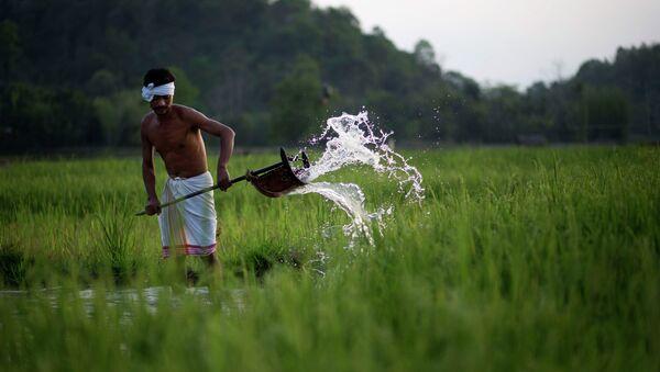 Indian farmer Moneswar Kathar irrigates his paddy field at Khetri village about 40 kilometers (25 miles) east of Gauhati, India, Wednesday, April 22, 2015 - Sputnik International