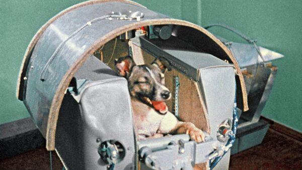 Space dog Laika - Sputnik International