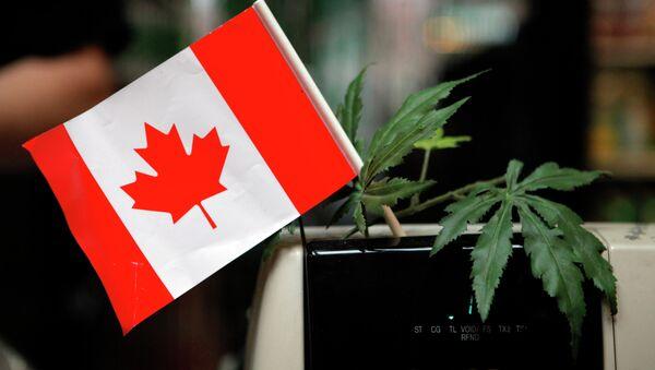 Canada's Supreme Court Rules Medical Marijuana Legal in All Forms - Sputnik International