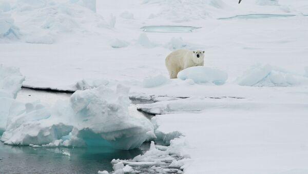 A polar bear stands on an ice floe near the Norwegian archipelago of Svalbard. File photo  - Sputnik International