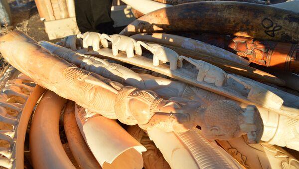 Ivory for crush in the morning light - Sputnik International