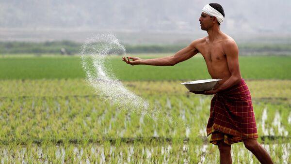 An Indian farmer sprays fertilizer at his paddy field - Sputnik International