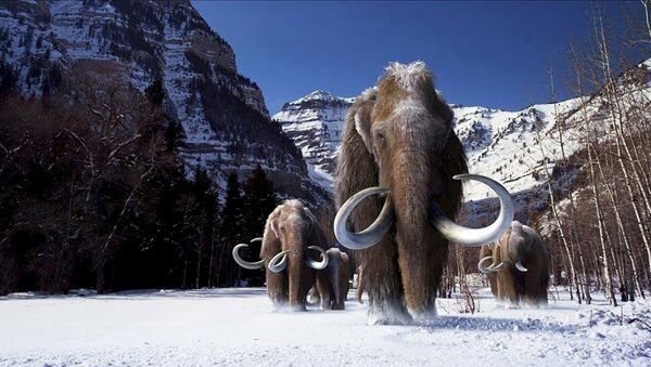 A group of woolly mammoths, the huge Ice Age mammals that lived and roamed the frigid tundra steppes of northern Asia, Europe and North America, are seen in this undated illustration provided courtesy of Giant Screen Films - Sputnik International