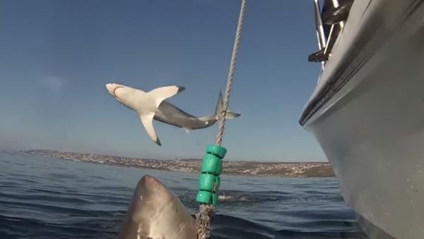 Jumping Shark - Sputnik International