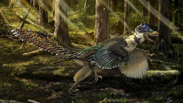 A reconstruction of the new short-armed and winged feathered dinosaur Zhenyuanlong suni from the Early Cretaceous (ca. 125 million years ago) of China is seen in this illustration image. - Sputnik International