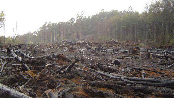 Deforestation - Sputnik International