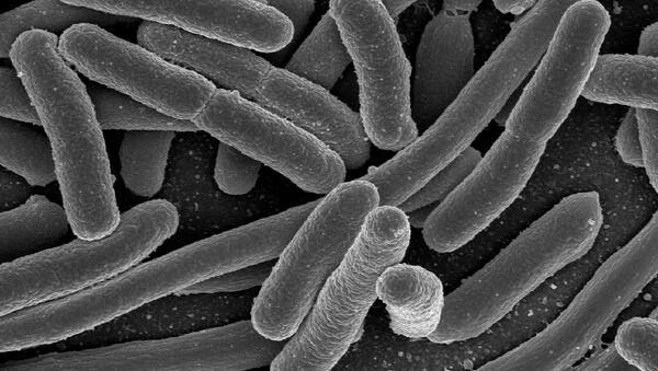 Electron micrograph of Escherichia coli, grown in culture and adhered to a cover slip. - Sputnik International