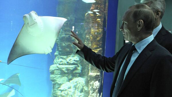 Russian President Vladimir Putin visits center of oceanography and marine biology Moskvarium - Sputnik International
