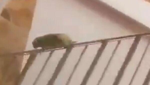 Pretty sure this bird is mental - Sputnik International