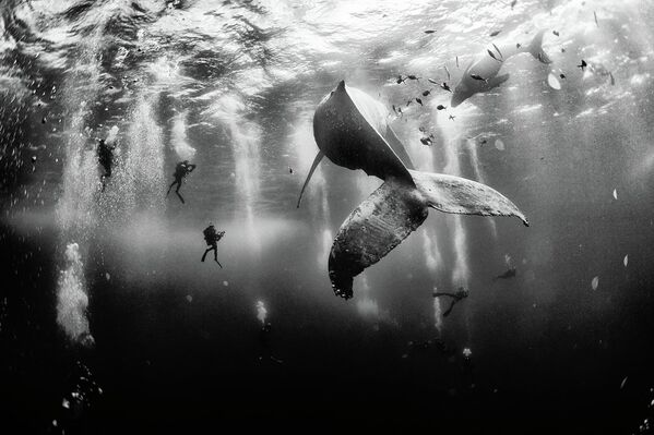 I believe in pure and limitless creative power and try to avoid all stereotypes regarding what I do with my camera and with the photographs I create. The first place winner of the National Geographic Traveler Photo Contest 2015, the photograph shows divers with a humpback whale and her newborn calf while they cruise around Roca Partida in the Revillagigedo [Islands], Mexico. - Sputnik International