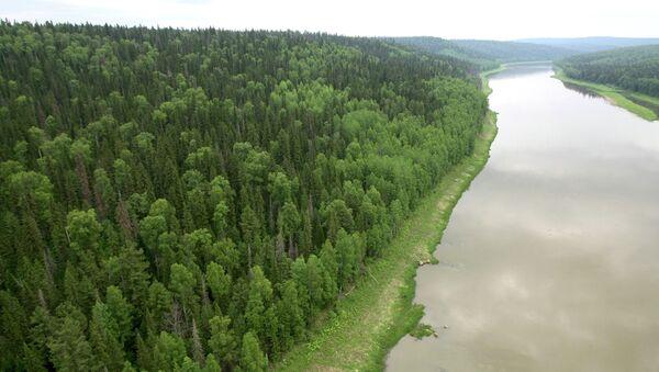 View of the taiga in the Yenisei District of Russia's Krasnoyarsk Territory. - Sputnik International