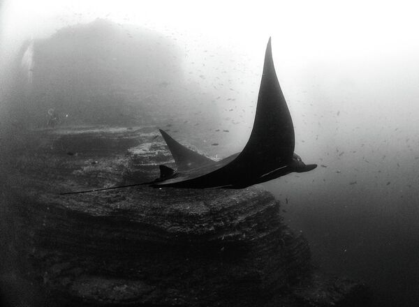We are not familiar with this environment because we don´t see what we destroy, so we are completely detached from the underwater reality. - Sputnik International