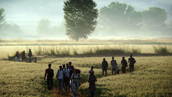 Migrants walk through a field to cross the border from Greece to Macedonia near the Greek village of Idomeni on August 29, 2015 - Sputnik International