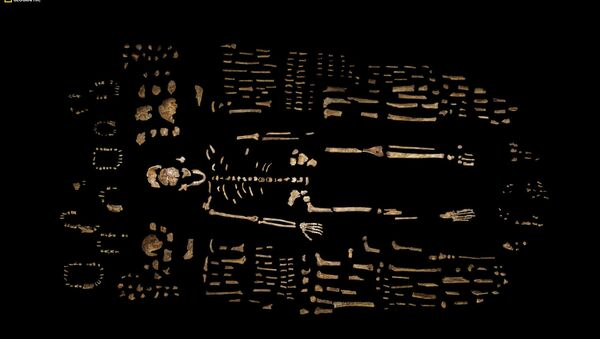This photo provided by National Geographic from their October 2015 issue shows a composite skeleton of Homo naledi surrounded by some of the hundreds of other fossil elements recovered from the Rising Star cave in South Africa - Sputnik International