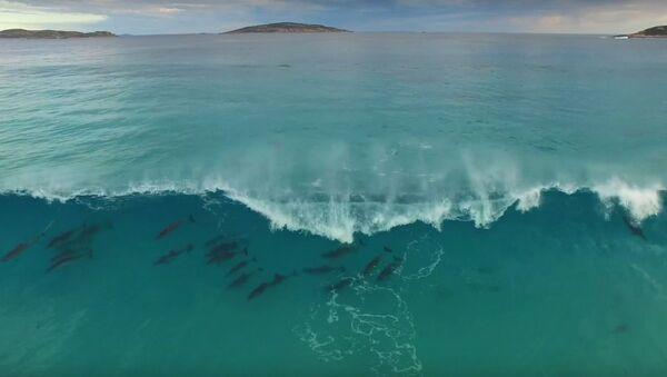 Dolphin Haze, Esperance Australia - Sputnik International