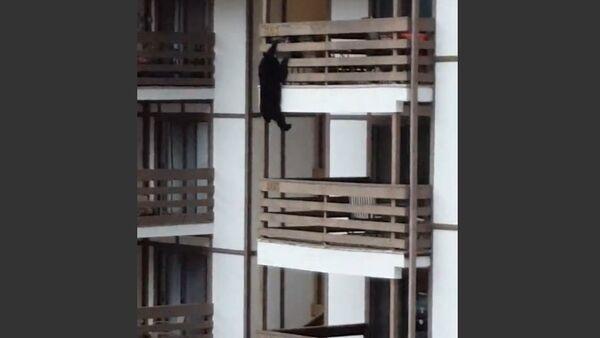 Bear Decides to Climb Condo Building - Sputnik International