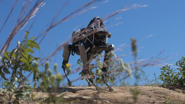 Spot the robot dog during training  - Sputnik International