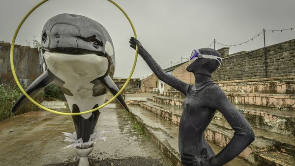 An installation of a killer whale jumping out of a toilet and through a hoop. - Sputnik International