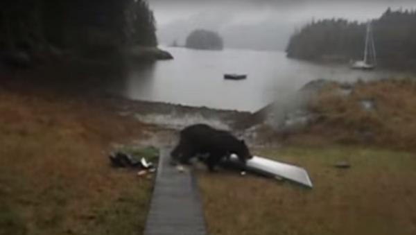 Women Tells Bear Not to Eat Her Kayak, Bear Promptly Eats Kayak - Sputnik International