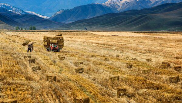 Китайский фермер убирает урожай - Sputnik International